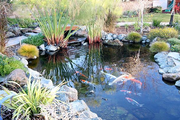 Koi pond builder santa cruz monterey san jose san for Custom koi ponds