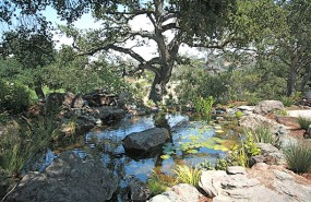 carmel-pond-magic-koi-pond-waterfall-(2)