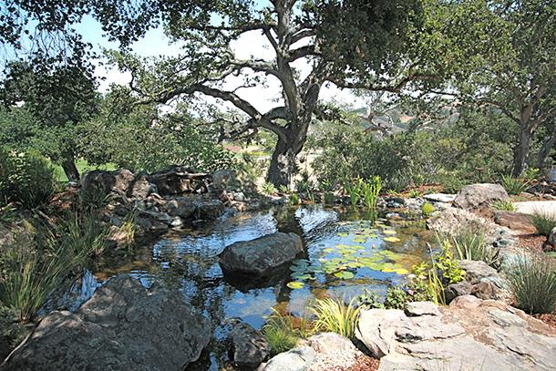 carmel-pond-magic-koi-pond-waterfall-(2)
