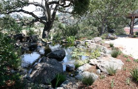 carmel-pond-magic-koi-pond-waterfall-(4)