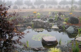 Hollister Pond with Wetland System, Waterfall, and Stream