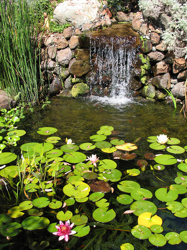 Mountain View Water Garden With Wetland And Stream