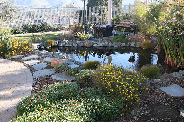 San Jose Pond with Waterfall and Tse Koi Filtration System