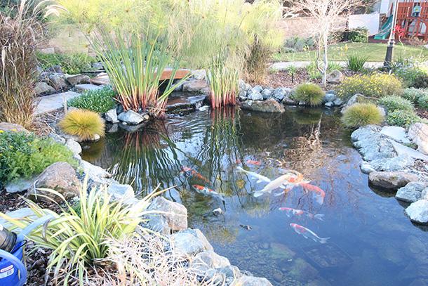 Pond Magic Hybrid Koi Pond
