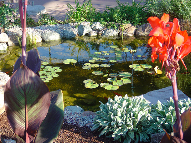 tully-road-display-pond-magic (4)