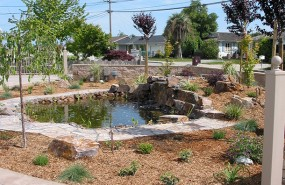 Koi Pond with Waterfall and Flagstone Pathway - Watsonville