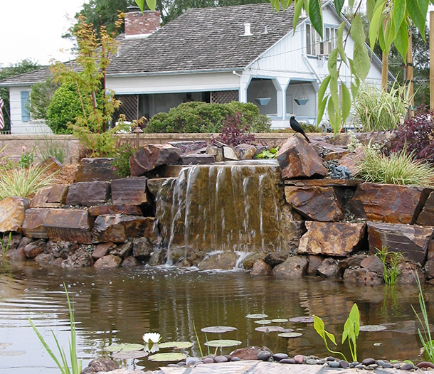 Watsonville koi pond with waterfall and flagstone pathway for Waterfall features for ponds