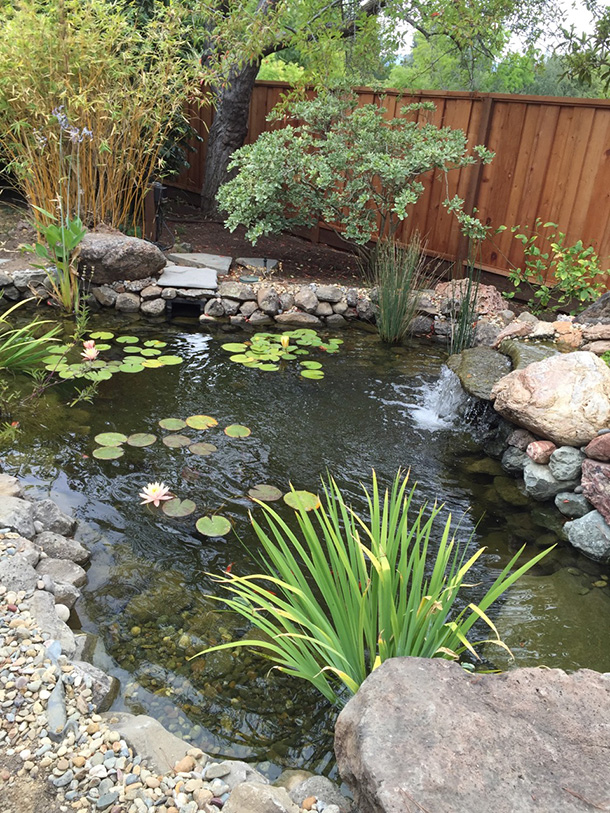 Santa cruz koi pond with waterfall pond magic custom for Koi holding pool