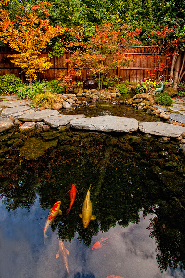 Koi Pond Builder Santa Cruz Monterey San Jose San